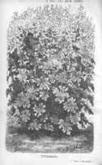 Ogrodnik Polski: dwutygodnik poświęcony wszystkim gałęziom ogrodnictwa 1880 R.2 T.2 Nr17