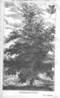 Ogrodnik Polski: dwutygodnik poświęcony wszystkim gałęziom ogrodnictwa 1880 R.2 T.2 Nr24